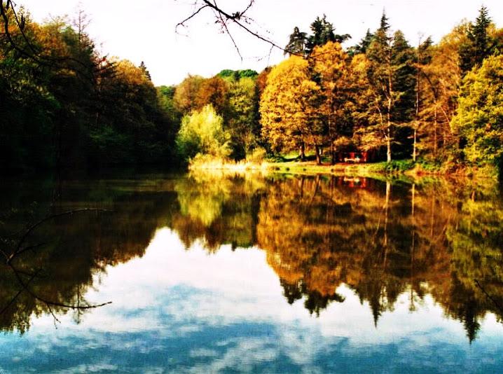 Il Parco dei Boschi di Carrega, una foto scattata all'interno del Parco