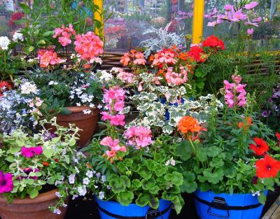 stand fiori