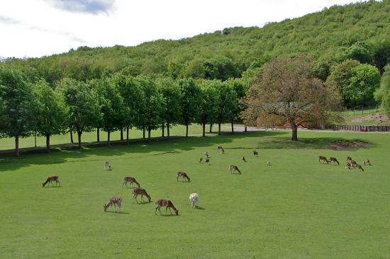 Parco Provinciale Monte Fuso - Parma