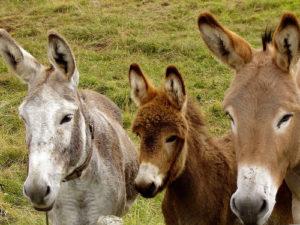 Benedizione degli Animali @ San Giovanni in Marignano RN | San Giovanni In Marignano | Emilia-Romagna | Italia