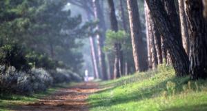 II° Corsa Podistica Riviera dei Pini @ Tagliata di Cervia